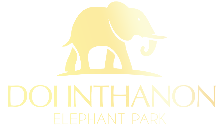 Doi Inthanon Elephant Park | register - Doi Inthanon Elephant Park